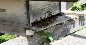 Tag des offenen Bienenstocks 2018