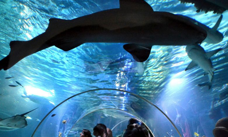 Ammenhai Ocean_SEA LIFE