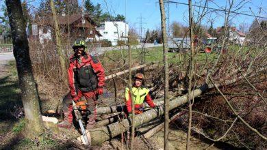 Rodungen in Lochau 2019