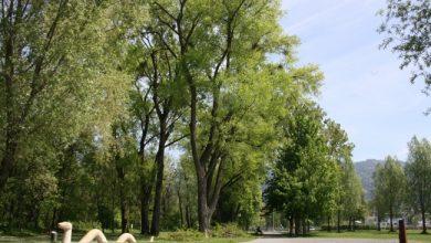 Photo of Professionelle Baumpflege im Lochauer Ortsgebiet und am See
