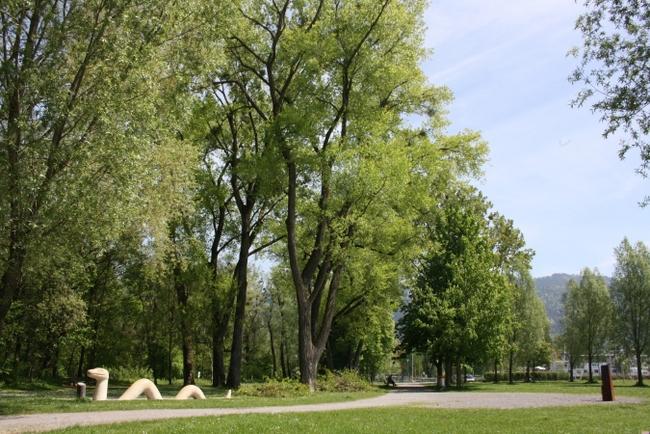 Professionelle Baumpflege in Lochau