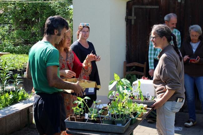 Pflanzentauschbörse Melittas Garten Lochau