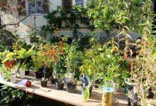 """Herbstliche Pflanzentauschbörse in """"Melittas Garten"""" in Lochau"""