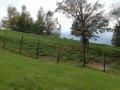 Alpwildpark-am-Pfaender