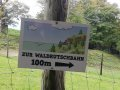 Alpwildpark-am-Pfaender8