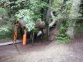 Alpwildpark-am-Pfaender9