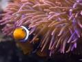 Hannover, Niedersachsen, 15. bis 17.04.2013 Foto: SEA LIFE Aquarium Hannover © Dirk Eisermann