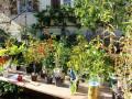 Herbstliche-Pflanzentauschboerse-in-in-Lochau-3