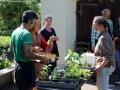 Pflanzentauschbörse-Melittas-Garten-Lochau-1