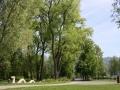 Professionelle-Baumpflege-in-Lochau-2