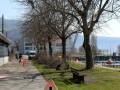 Professionelle-Baumpflege-in-Lochau-3