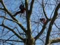 Professionelle-Baumpflege-in-Lochau-4