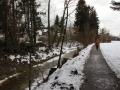Rodungen-in-Lochau-2019-2