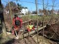 Rodungen-in-Lochau-2019-4