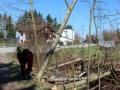Rodungen-in-Lochau-2019-5