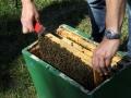 Tag des Bienenstocks 2017 (1)