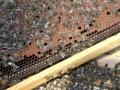 Tag des Bienenstocks 2017 (12)