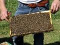 Tag des Bienenstocks 2017 (2)