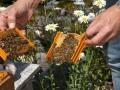 Tag des Bienenstocks 2017 (27)