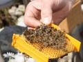 Tag des Bienenstocks 2017 (28)