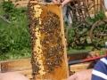 Tag des Bienenstocks 2017 (39)