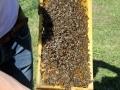 Tag des Bienenstocks 2017 (6)