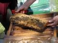 Tag des Bienenstocks 2017 (9)