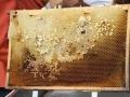 Tag-des-offenen-Bienenstockes-2019-7