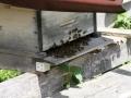 Tag des offenen Bienenstocks 2018 (15)