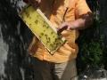 Tag des offenen Bienenstocks 2018 (20)